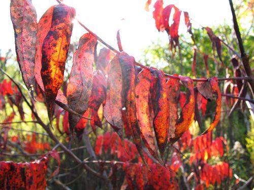 Redsticks