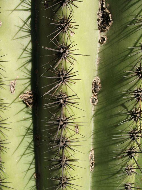 CactusB