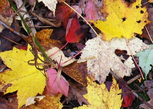 Leaves4.10.09