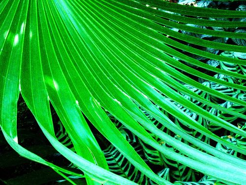 Fronds2