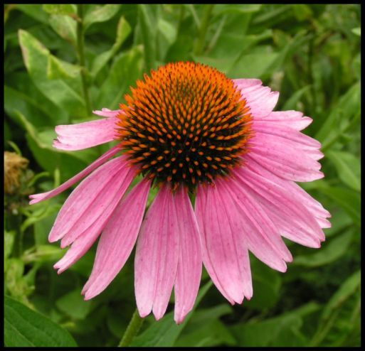 Bellvue_park_flower_2
