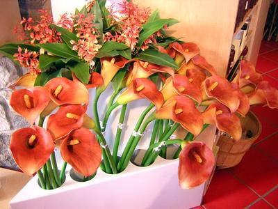 Pieroneflowers